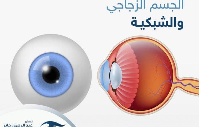 الجسم الزجاجي والشبكية - عبد الرحمن جابر